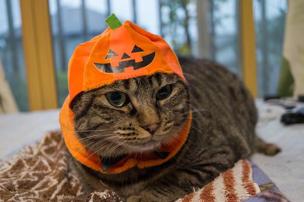 かぼちゃneko