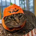 Photos: かぼちゃneko