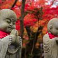 写真: 京の秋 1