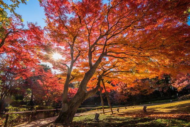 写真: 秋、燃ゆる