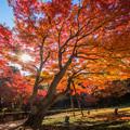 秋、燃ゆる