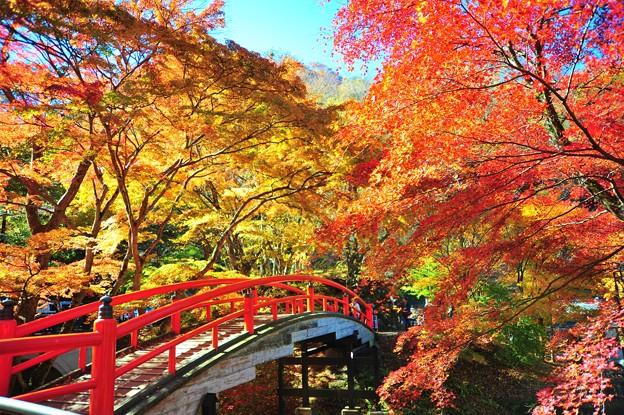Photos: 河鹿橋
