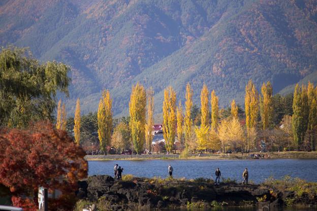 写真: 11月初河口湖