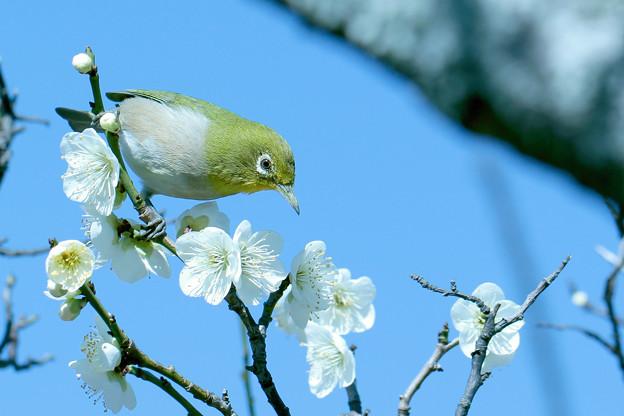 春を楽しんで!!