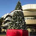 Photos: コクーンのクリスマスツリー