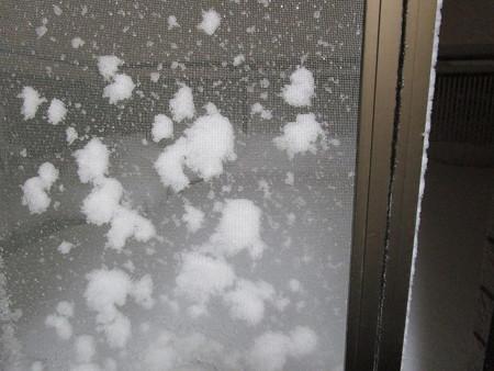 網戸に積雪