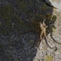写真: 蜘蛛が捕獲されてます (*_*)