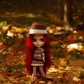 写真: 深まる秋