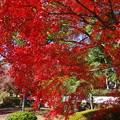 写真: 秋を愛でる