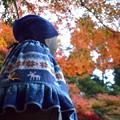 Photos: 空の青を見る青地蔵@明月院 #湘南 #鎌倉 #mysky #紅葉