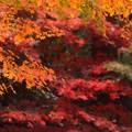 Photos: 見事な明月院後庭園の紅葉 #湘南 #鎌倉 #mysky #紅葉