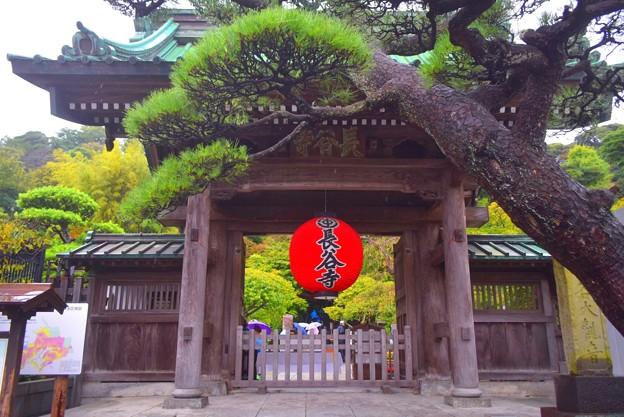 海光山長谷寺 山門 #湘南 #鎌倉 #kamakura #寺 #花 #flower