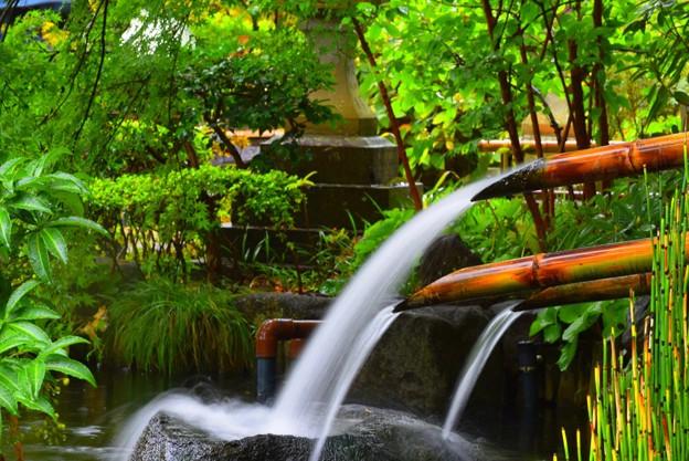 長谷寺前庭園 #湘南 #鎌倉 #kamakura #寺