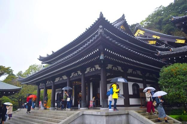 長谷寺観音堂 #湘南 #鎌倉 #kamakura #寺