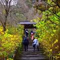 明月院参道と山門 #湘南 #鎌倉 #kamakura #寺 #temple #紅葉