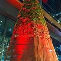 ニコライバーグマンプロデュースのクリスマスツリー #クリスマスツリー #xmas #イルミネーション #東京