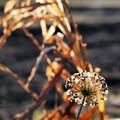 Golden-brown.......