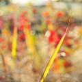 Photos: Grass.......