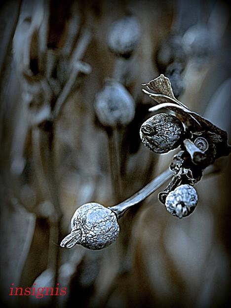 数珠玉.......