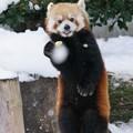 初めての広島の冬、もう慣れたかな?キラ君。@雪の安佐