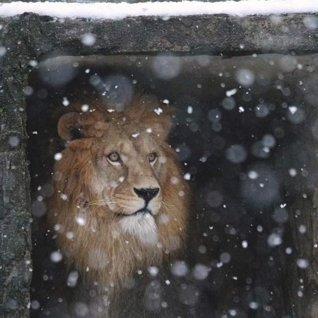 写真: 雪見ライト父さん。@安佐
