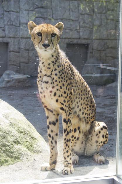 Tama-zoo_009