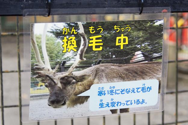 換毛のお知らせ [羽村市動物公園]
