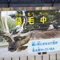 Photos: 換毛のお知らせ [羽村市動物公園]
