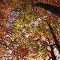 会津駒ヶ岳の紅葉1_607