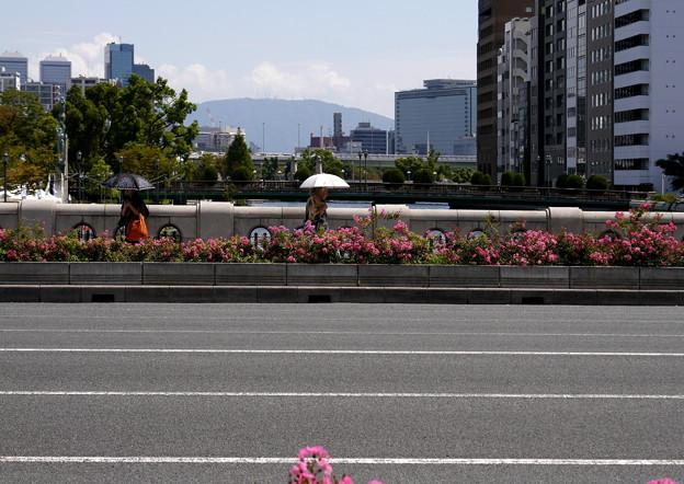 花咲く淀屋橋