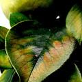 写真: 緑葉染彩