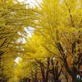 Photos: 金葉