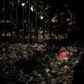 写真: 枯葉に咲く