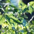 写真: 葉っぱ