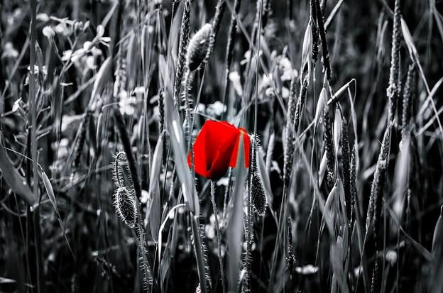 Floral Magic in Spring(10024) Repost