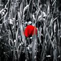 Photos: Floral Magic in Spring(10024) Repost