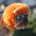 サングラス犬