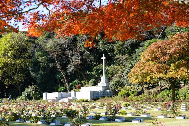 英連邦墓地