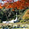 写真: 英連邦墓地
