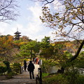 写真: 橋と三重塔