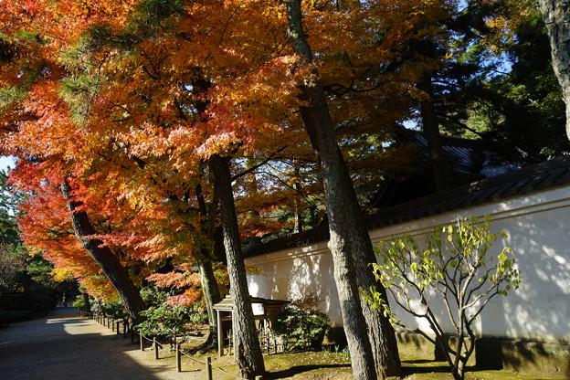 写真: 三渓園