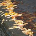 写真: 枯れ葉