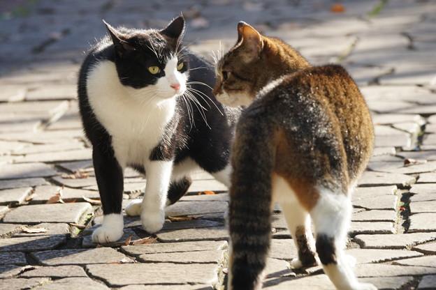 睨み合う猫