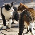 写真: 睨み合う猫
