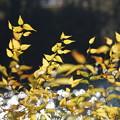 写真: 湖畔の紅葉
