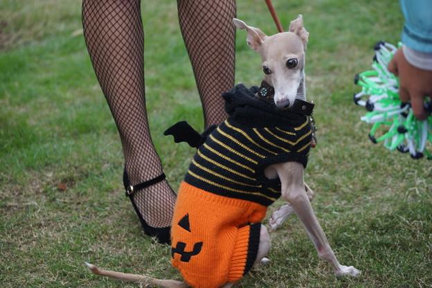 Photos: 散歩中休む犬
