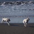 疾走する犬