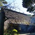 Photos: 冬の三渓園