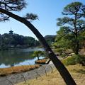 Photos: 松越しに三重塔