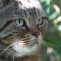 写真: 江の島の猫
